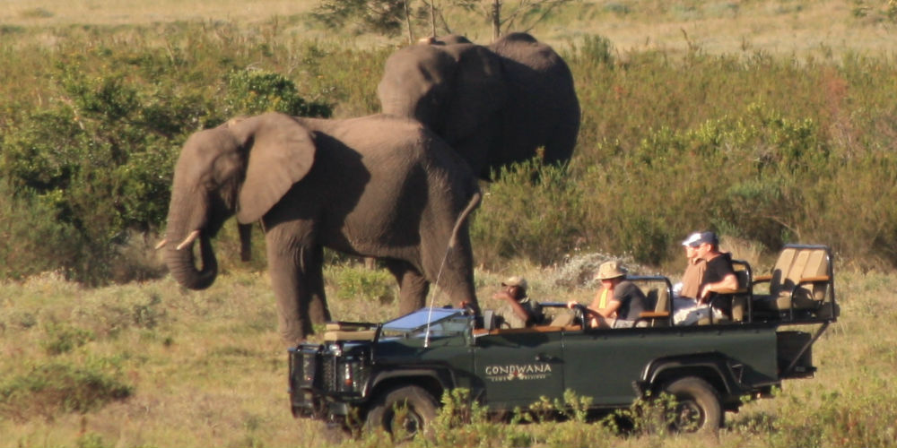 Game Drive - Safari in South Africa